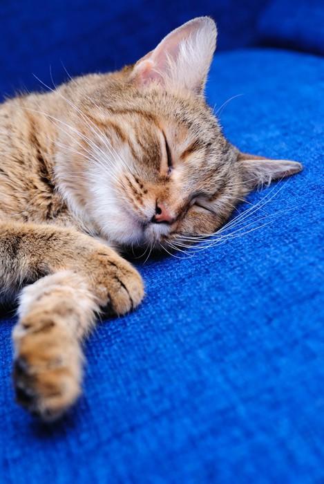 Vinylová fototapeta Spící kočka - Vinylová fototapeta