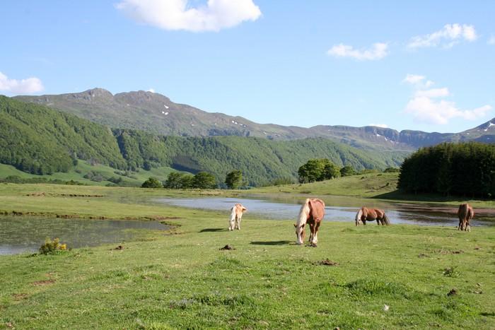 Vinylová Tapeta Koně a hory Cantal - Outdoorové sporty