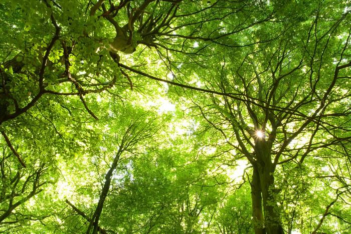 Plakát V létě zelené lesy - Stromy