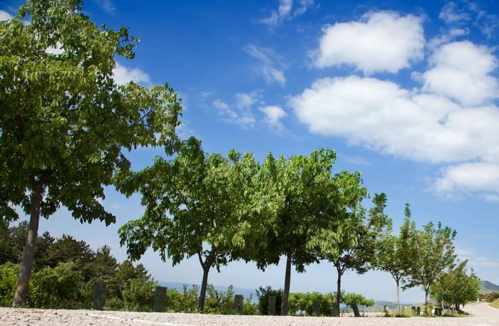 Vinylová Tapeta Stromy lemovaná proti obloze - Roční období
