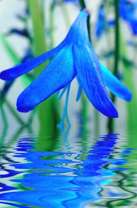 blue flower reflection in water Sticker - Pixerstick - Themes
