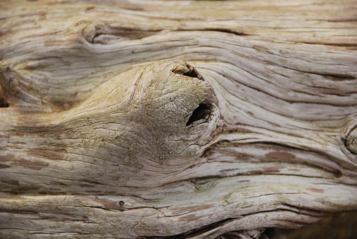 Tableau sur toile bois flott sensuelle pixers nous for Tableau sur bois flotte