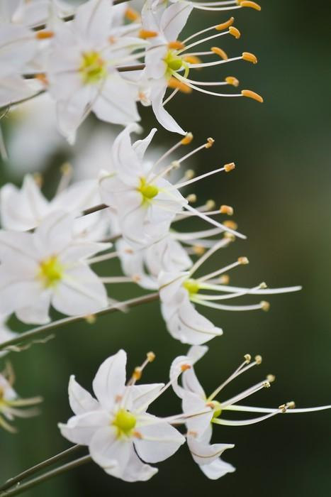 Vinylová Tapeta Květiny kontrast pozadí - Květiny