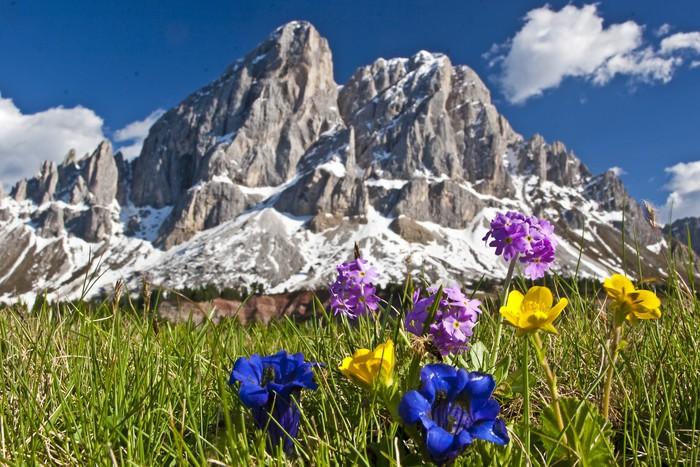 Carta da parati fiori di montagna nelle dolomiti pixers for Carta da parati per casa in montagna