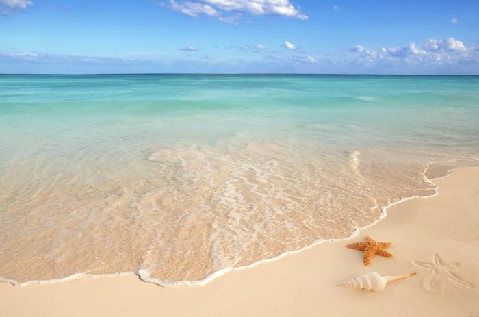 Quadriptyque Coquillages étoile de mer tropicale sable turquoise des Caraïbes - Thèmes
