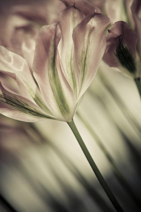 Tableau sur Toile Beaux-Arts de close-up Tulipes, floue et nette - Pour salon de coiffure