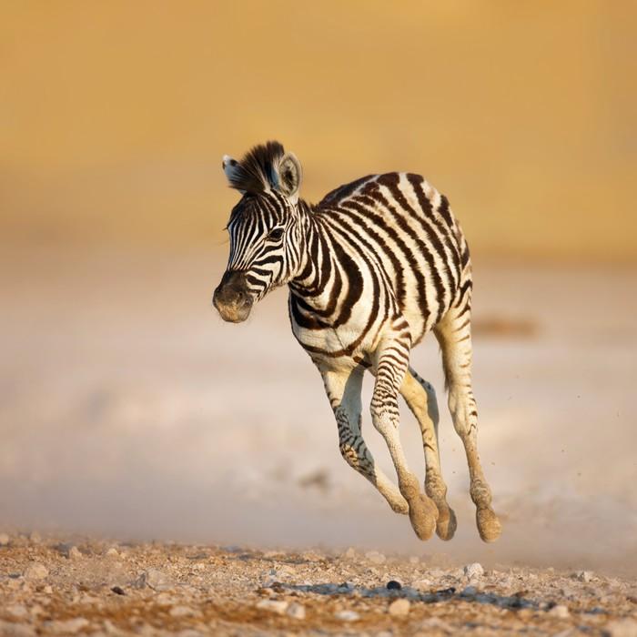 Fotomural Bebé cebra corriendo • Pixers® - Vivimos para cambiar