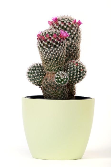 leinwandbild kaktus mit bl te pixers wir leben um zu. Black Bedroom Furniture Sets. Home Design Ideas