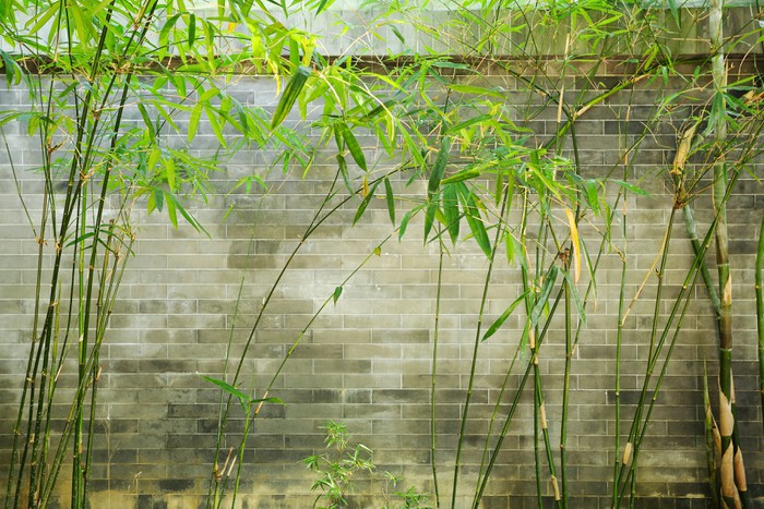 Vinylová Tapeta Bambus a cihlové zdi - Štěstí