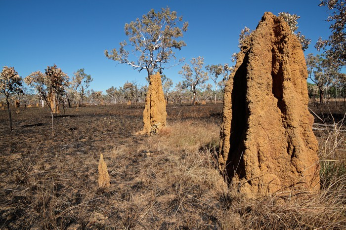 Vinylová Tapeta Katedrála termite, Austrálie - Oceánie