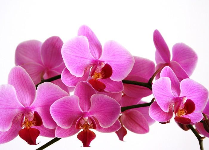 orchid hotel eco friendly pdf