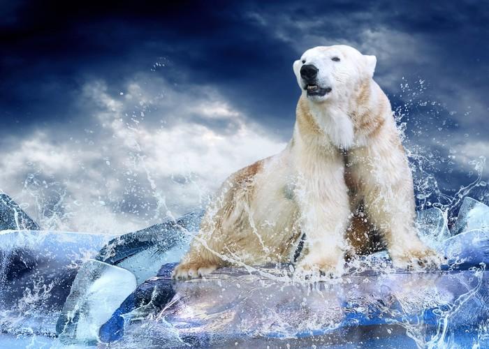 Vinylová Tapeta White Polar Bear Hunter na ledě v kapky vody. - Styly