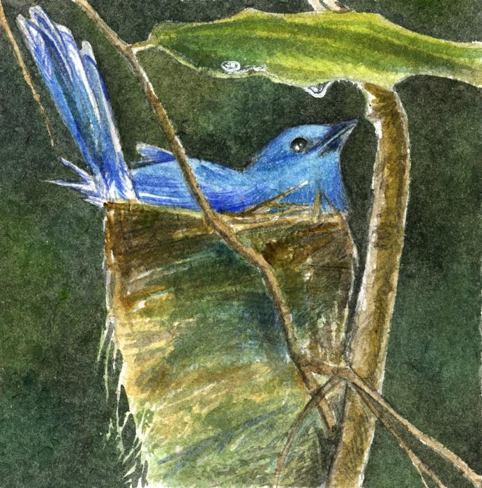 Vinylová Tapeta Uccello celeste nel nido - Zdraví a medicína