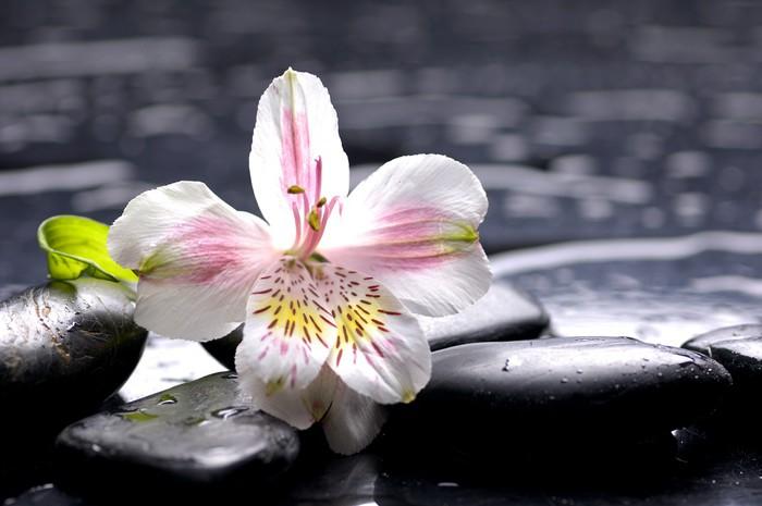 Tableau sur Toile Nature morte avec des Phalaenopsis orchidée frais - Thèmes