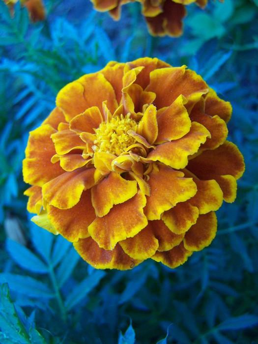 Vinylová Tapeta Kwiat - Rostliny
