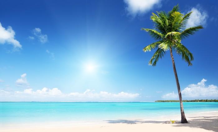 Vinylová Tapeta Palmy a moře - Roční období