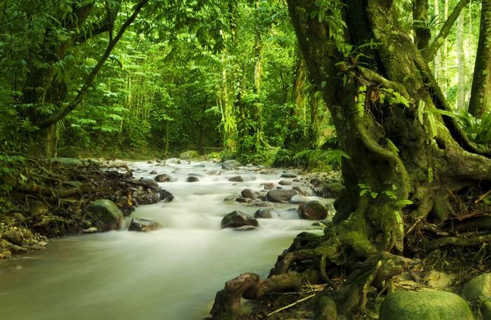 Fototapete tropischer regenwald  Fototapete Tropischer Regenwald und Fluss • Pixers® - Wir leben, um ...