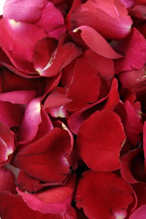 Vinylová Tapeta Okvětní lístky růží tvořící texturu - Životní styl, péče o tělo a krása