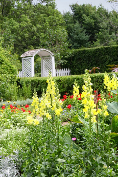Vinylová Tapeta Snapdragon Garden - Domov a zahrada
