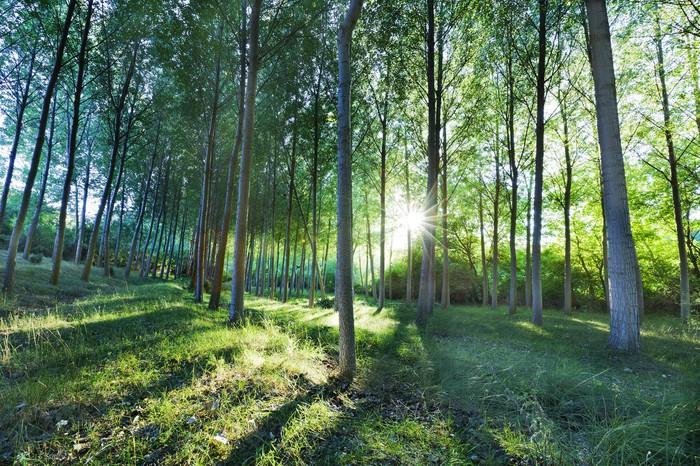 Vinylová Tapeta Bosque verde - Lesy