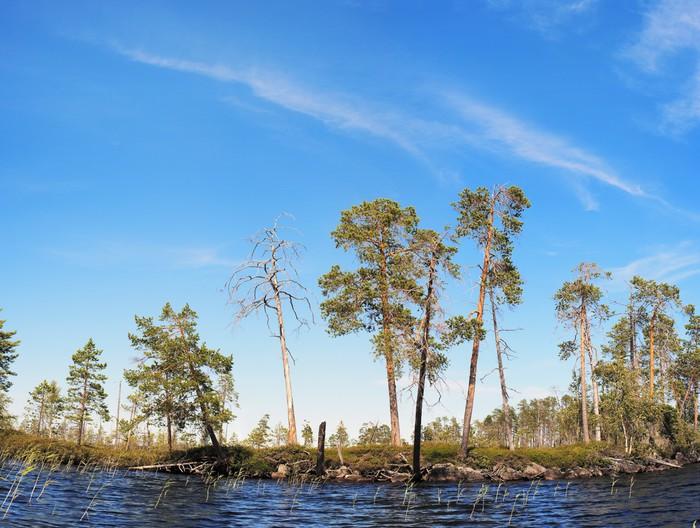 Vinylová Tapeta Borovice na severním pobřeží jezera - Příroda a divočina
