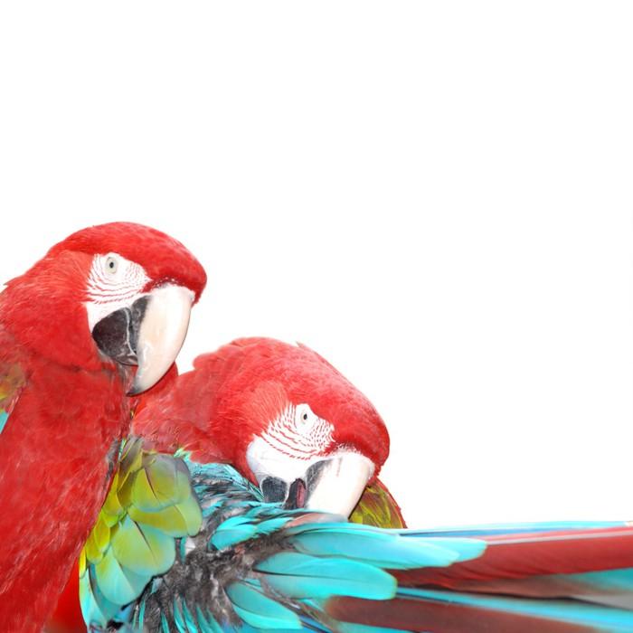 papier peint ara rouge perroquet oiseau pixers nous vivons pour changer. Black Bedroom Furniture Sets. Home Design Ideas