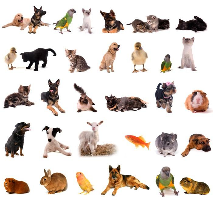 Vinilo Pixerstick Animales collage • Pixers® - Vivimos para cambiar