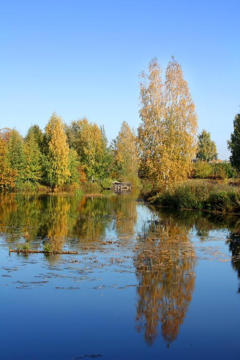 Vinylová Tapeta Krásná krajina v parku. Podzimní scéna - Roční období