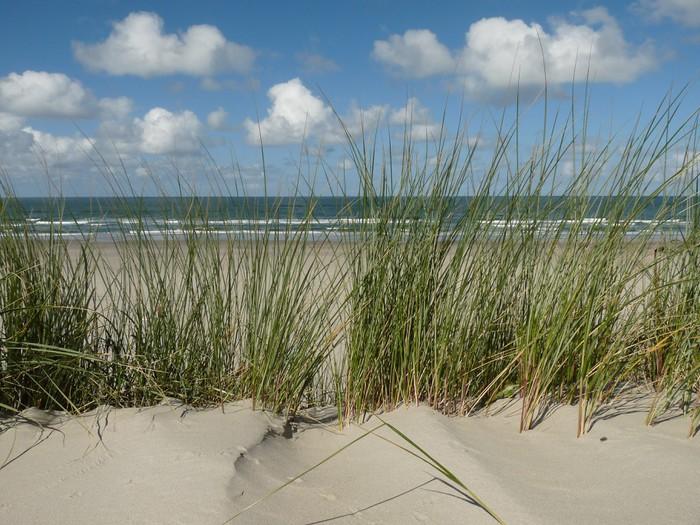 Vinylová Tapeta Ameland Nordsee Küste Strand Holland - Nizozemí