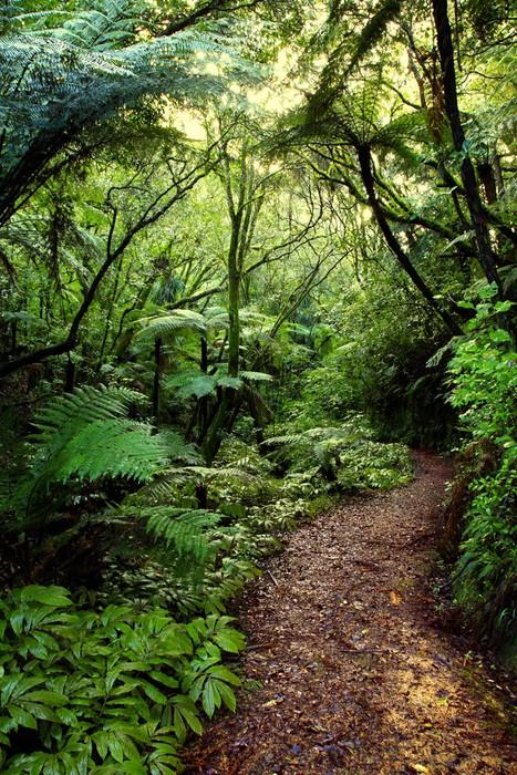 Papier Peint Vinyle Forest tropical - Thèmes