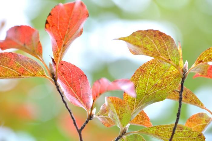 papier peint les feuilles rouges pixers nous vivons pour changer. Black Bedroom Furniture Sets. Home Design Ideas