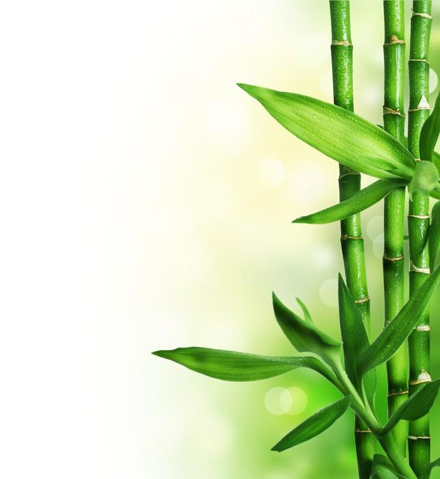 Nálepka Pixerstick Bambus izolovaných na bílém - Přírodní krásy