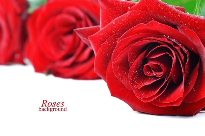 Vinylová Tapeta Tři červené růže s kapkami rosy - Slavnosti