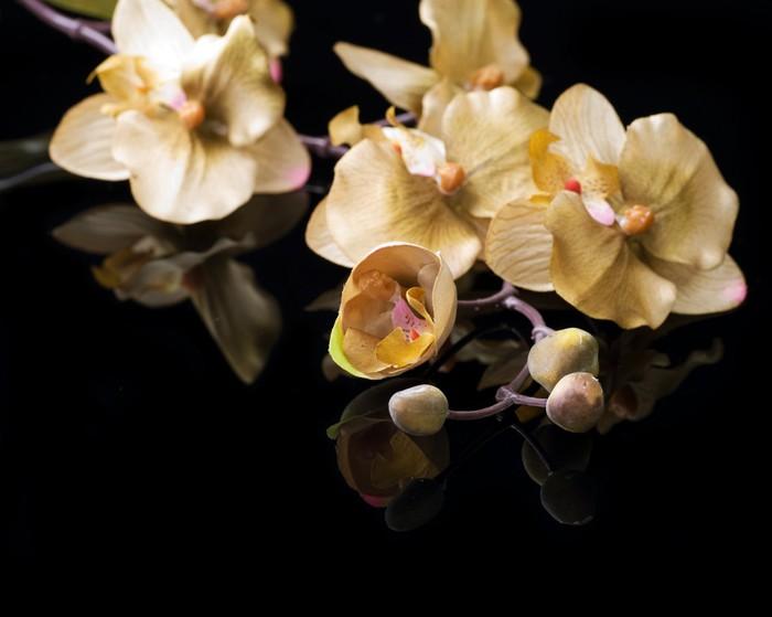 Vinylová Tapeta Krásná orchidej na černém - Témata