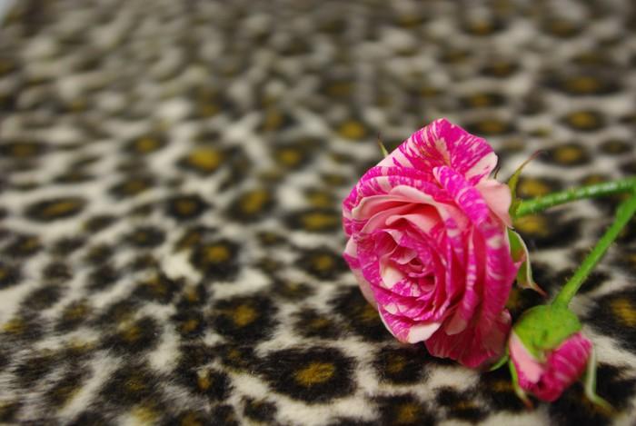 Pink rose Vinyltapet - Teksturer