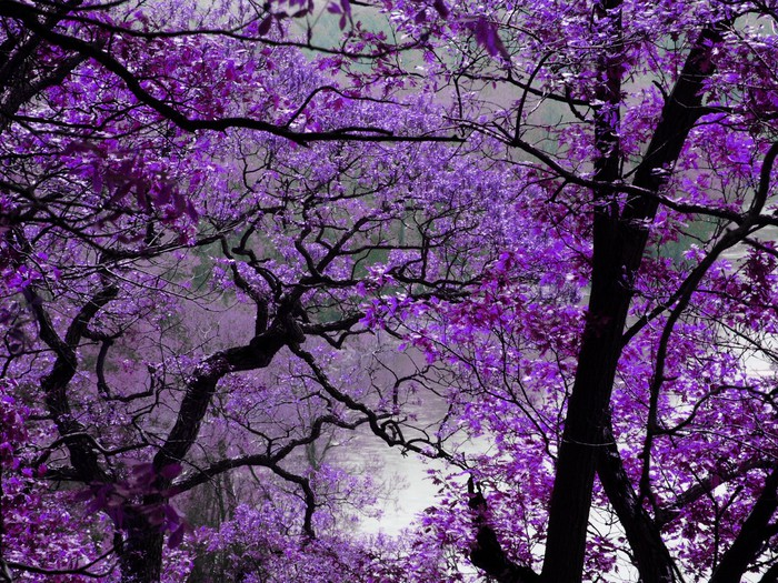 purple spring Wall Mural - Vinyl - Themes