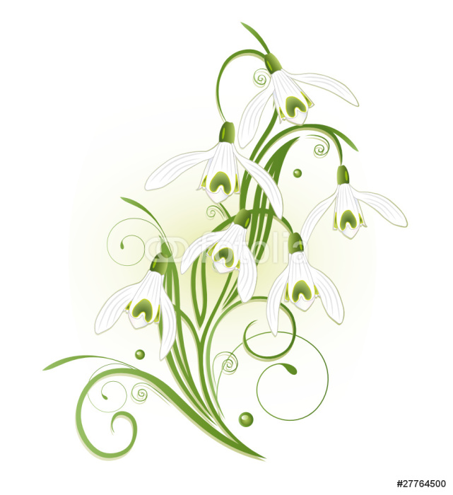 Vinylová Tapeta Schneeglöckchen, sněženka, flóry, Frühling, Blume - Květiny