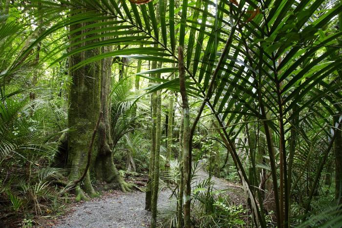Papier Peint Vinyle Forest tropical - Forêt