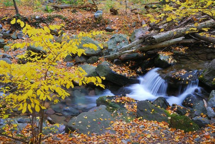 Nálepka Pixerstick Podzimní potok se žlutými javorů - Roční období