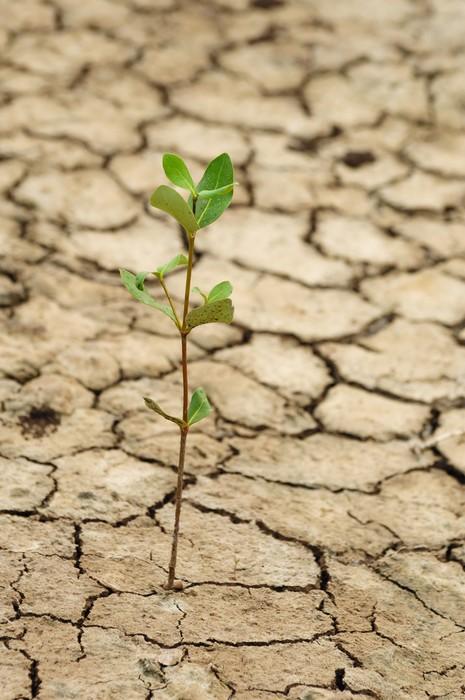 papier peint plante qui pousse dans une fissure sur un sol sec pixers nous vivons pour changer. Black Bedroom Furniture Sets. Home Design Ideas