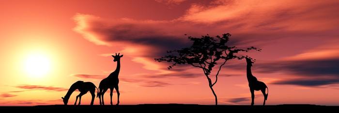 Vinylová fototapeta Rodina žirafy - Vinylová fototapeta