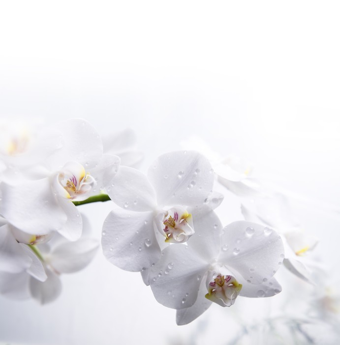Adesivo orchidea bianca sull 39 acqua pixers viviamo per for Orchidea acqua