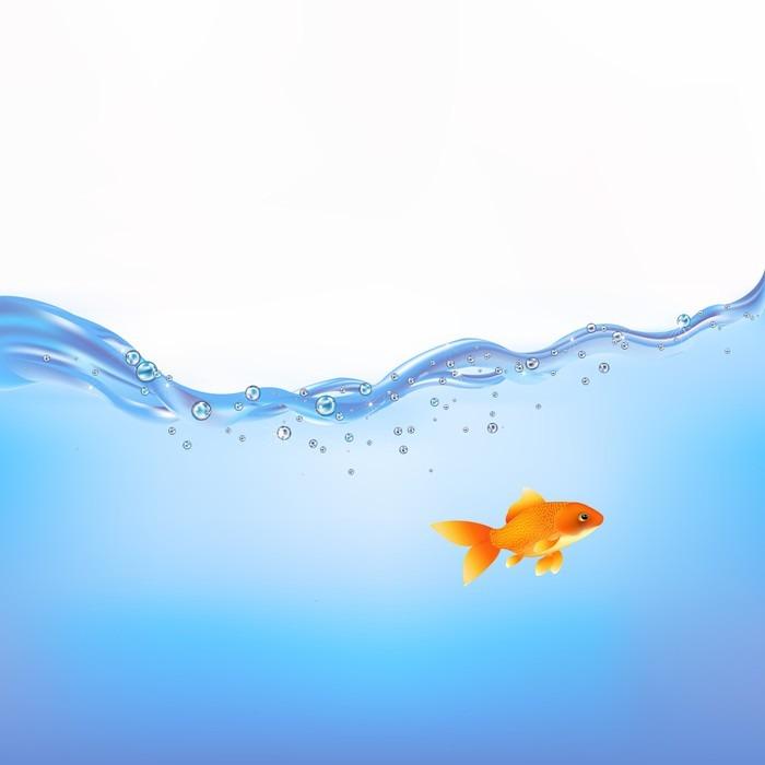 Papier peint poisson rouge dans l 39 eau pixers nous for Eau pour poisson rouge
