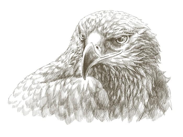 Fotomural Lápiz águila línea de arte dibujo • Pixers® - Vivimos para ...