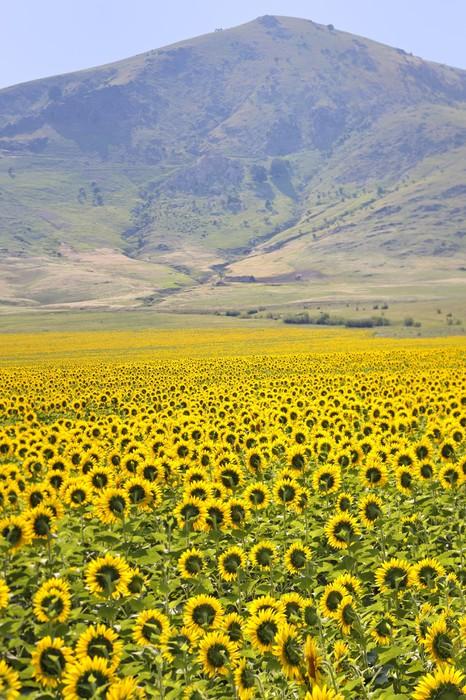 Vinylová Tapeta Žluté slunečnice a hory - Rostliny