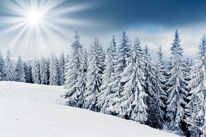 Vinylová Tapeta Zimní stromy - Styly