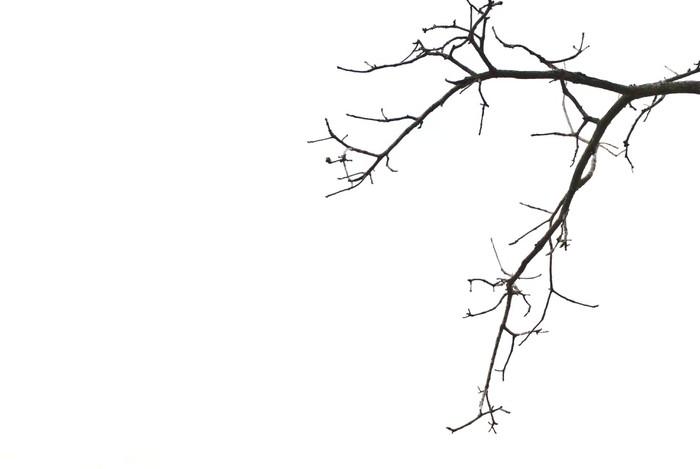 Vinylová Tapeta Větve - Rostliny