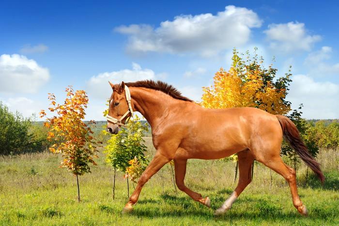Vinylová Tapeta Koně 130 - Savci