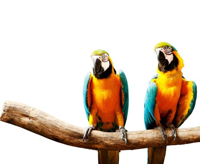 papier peint oiseau perroquet color assis sur le perchoir pixers nous vivons pour changer. Black Bedroom Furniture Sets. Home Design Ideas