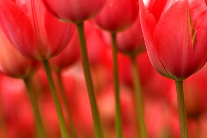 Tableau sur Toile Les tiges et les fleurs - Thèmes